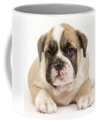 English Bulldog Puppy Coffee Mug