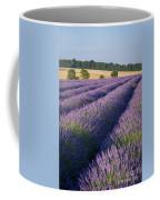 English Lavender Coffee Mug