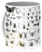 Entomology Myriapoda And Arachnida  Coffee Mug