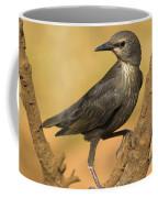 Estornino  Coffee Mug