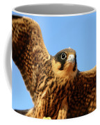 Eurasian Hobby Falco Subbuteo In Coffee Mug