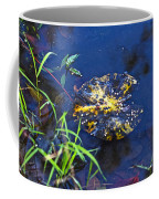 Evening Encloses The Aging Lily Pad Coffee Mug