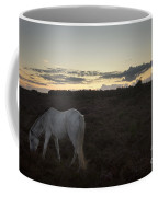 Evening In New Forest Coffee Mug