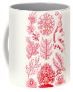 Examples Of Florideae From Kunstformen Der Natur Coffee Mug by Ernst Haeckel