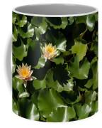 Exotic Colored Waterlilies In The Hot Mediterranean Sun Coffee Mug