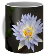 Exquisite Lavender Waterlily Coffee Mug