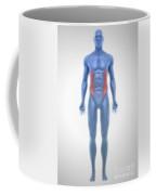 External Oblique Muscles Coffee Mug