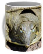 Eye Liner Turtle 8494 Coffee Mug