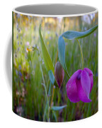 Fairy Lantern In Park Sierra-ca Coffee Mug