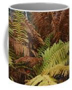 Fall Ferns Acadia National Park Img 6355 Coffee Mug