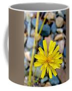 False Dandelion Or Cat's Ear In Five Finger Rapids Recreation Site Along Klondike Hwy-yt  Coffee Mug