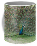 Feathers On Display Coffee Mug