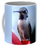 Female Anna With Purple Blue Throat Coffee Mug