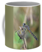 Female Blue Dasher In July  Coffee Mug