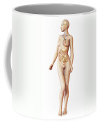 Female Body With Full Endocrine System Coffee Mug