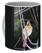 Female Cardinal In Tree Coffee Mug