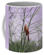 Female Cardinal In Willow Coffee Mug