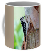 Female Downy Woodpecker Coffee Mug