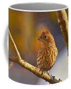 Female Housefinch Coffee Mug