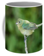 Female Painted Bunting Passerina Ciris Coffee Mug