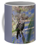 Female Red-winged Blackbird Coffee Mug