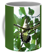Female Ruby Throated Hummingbird Coffee Mug