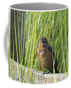 Fence Grackle Coffee Mug