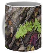 Fern And Maple Leaves Maine Img 6182 Coffee Mug