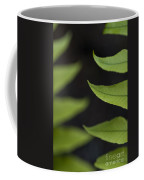 Fern Cyrtomium Fortunei Coffee Mug