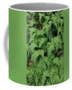 D3b6333-ferns In Sonoma 2  Coffee Mug