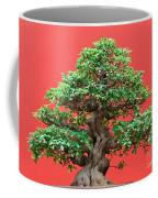 Ficus Bonsai Coffee Mug