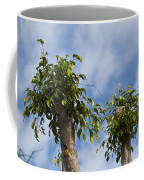 Ficus Leaves Against The Sky Coffee Mug