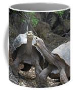 Fighting Galapagos Giant Tortoises Coffee Mug