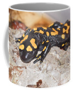Fire Salamander Salamandra Salamandra Coffee Mug