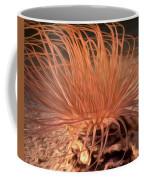 Firework Anemone Coffee Mug