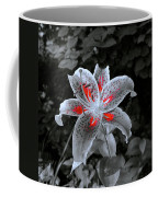 First Sunbeams Begin To Paint Coffee Mug