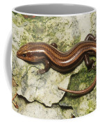 Five-lined Skink Coffee Mug