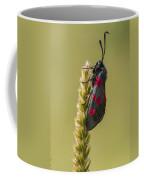 Five Spot Burnet Coffee Mug