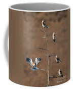 Five White-tailed Kite Siblings Coffee Mug