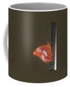 Flame-bordered Charaxes Butterfly #3 Coffee Mug