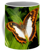 Flame Bordered Charaxes Butterfly Coffee Mug