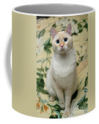 Flame Point Siamese Cat Coffee Mug by Amy Cicconi