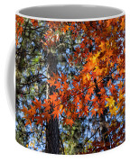 Flaming Maple Beneath The Pines Coffee Mug