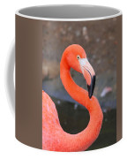 Flamingo Close Up Coffee Mug