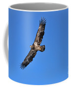 Fledgling Bald Eagle 5048 Coffee Mug