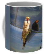 Yellow Shafted Northern Flicker Hanging Around Coffee Mug
