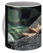 Floating.  Tahquitz Canyon. Palm Springs California.  Coffee Mug