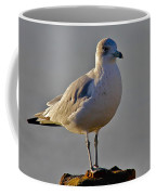 Florida Gull Coffee Mug