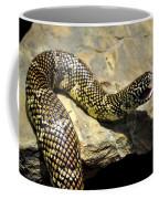 Florida King Snake Lampropeltis Getula Floridana Usa Coffee Mug
