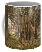 Florida Rubber Tree, C1900 Coffee Mug